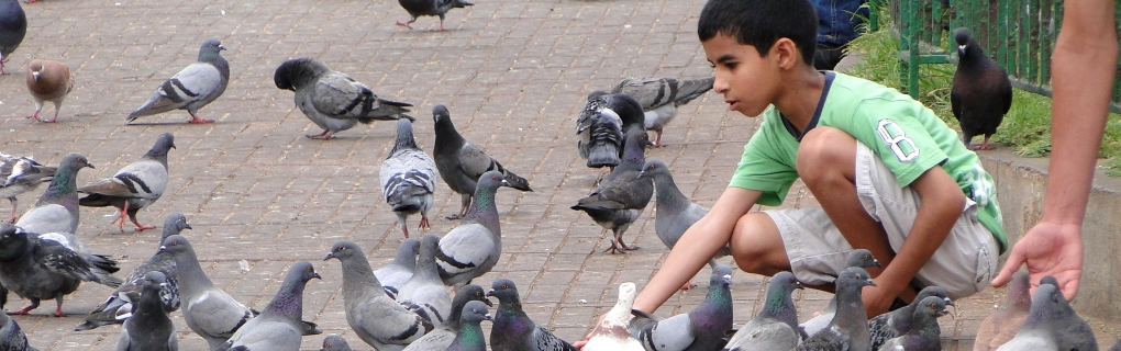 Pigeons have been a friend of fascination for thousands of years.